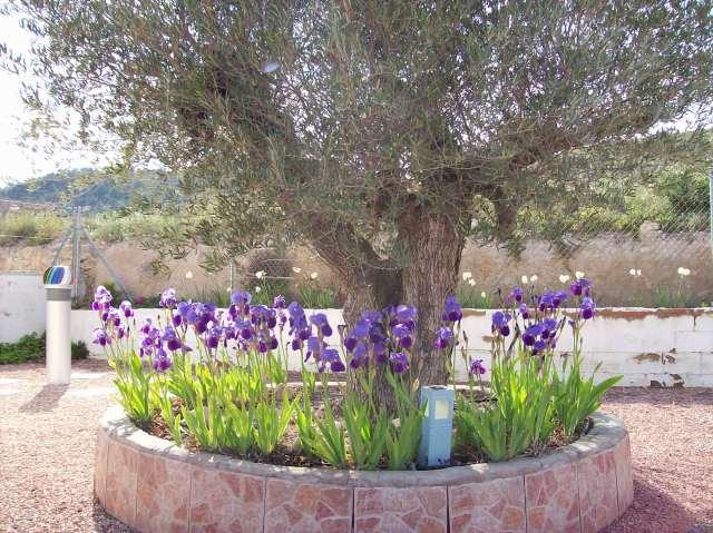 3 Olive and Iris