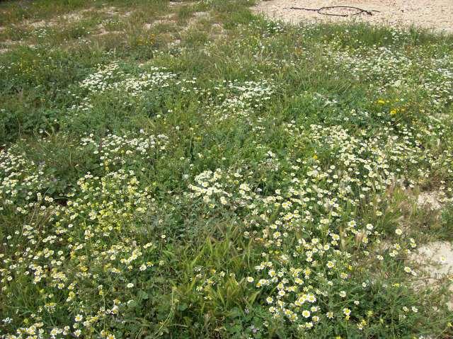 8b Wild Flowers
