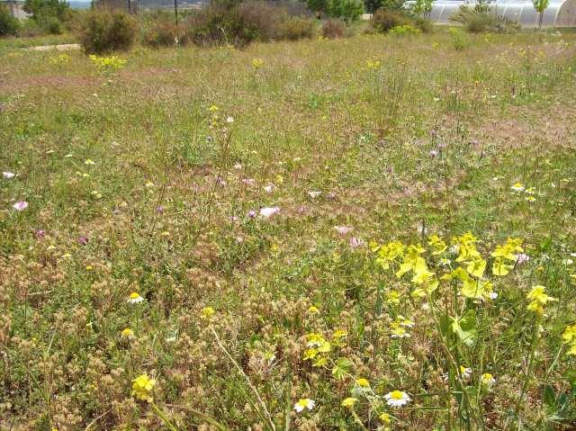 8c Wild Flowers