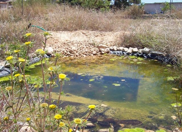 8d Pond