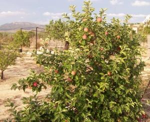 13a Apples