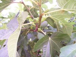 13f Figs 2