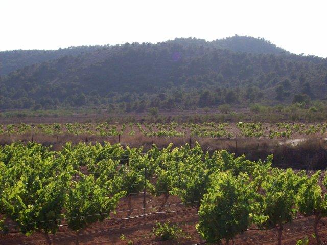 15g Vines & Pines